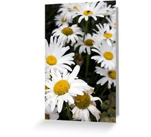large wild irish daisies Greeting Card