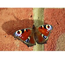 Butterfly shadows Photographic Print
