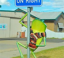 The Info Frog by Penny Smith