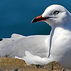 The Seagull by hurky