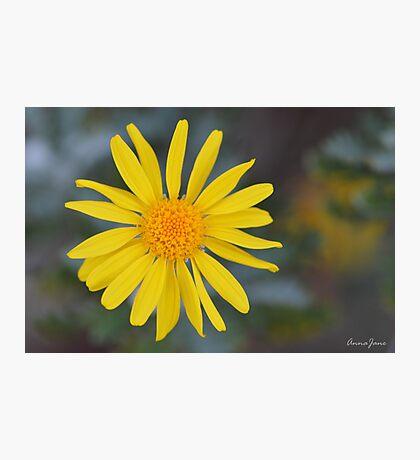 Daisy, Daisy... Photographic Print