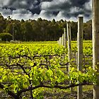 Vineyard - Margaret River by Tyson Battersby