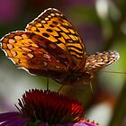 Butterfly breakfast 3 by Chris Kiez
