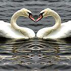 Mute Swan Heart by Avril Harris