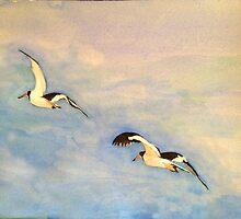 American Oystercatcher in flight, Smith Island by Phyllis Dixon