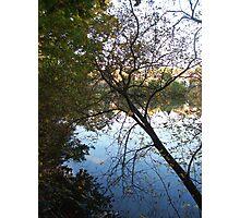 fallen tree Photographic Print