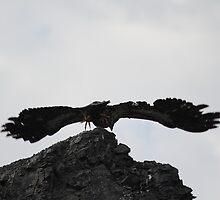 Flying Eagle by KansasA
