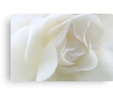 Purity ~ November Rose Canvas Print