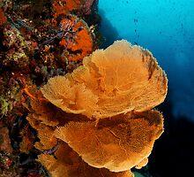 Sea Fan Coral by printscapes