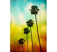 4 Palms Photographic Print