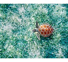 Green Sea Turtle from Above Photographic Print