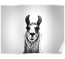 Black and White Llama Poster