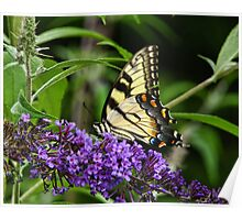 Butterfly on Bush Poster
