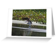Osprey's Successful Fishing Trip Greeting Card