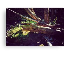 River Scarred Canvas Print