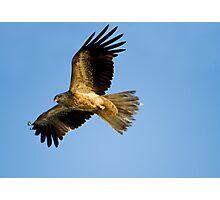 Hunting Photographic Print