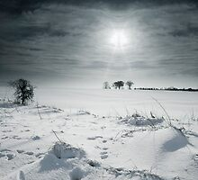 Winter bare. by Kit347