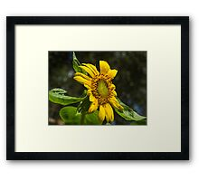 Dancing in the Sun Framed Print