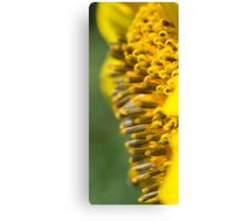 Deep Inside the Sunflower Canvas Print