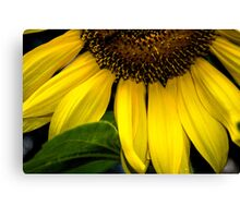 Slice of the Sunflower Canvas Print