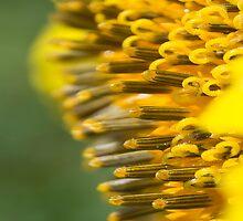 Deep Inside the Sunflower by designingjudy