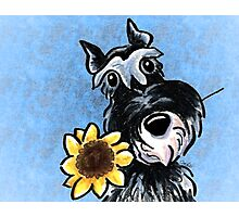 Sunny Schnauzer Blue Photographic Print