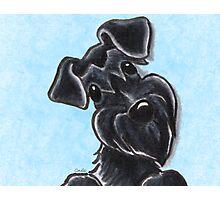 Black Schnauzer Natural Ears Photographic Print