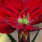 Tiny Baby Katydid by Gabrielle  Lees