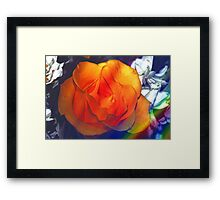 Gold rose 2 Framed Print