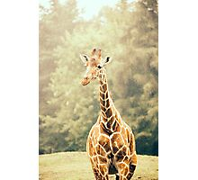 Giraffe Portrait Photographic Print