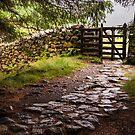 The Path at Blea Tarn by John Dunbar