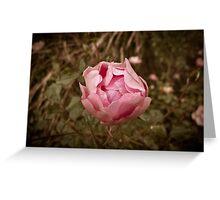 Autumn pink rose, vintage Greeting Card