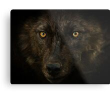 Midnights Gaze - Black Wolf Wild Animal Wildlife Metal Print