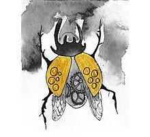 Beetle Photographic Print
