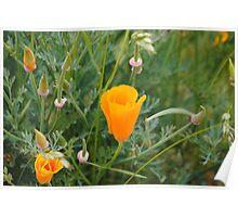 Flower Beauty - 7 Poster