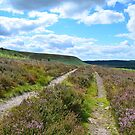Moors Track, where will it take you? by apple88
