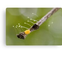 Insect Eggs Canvas Print
