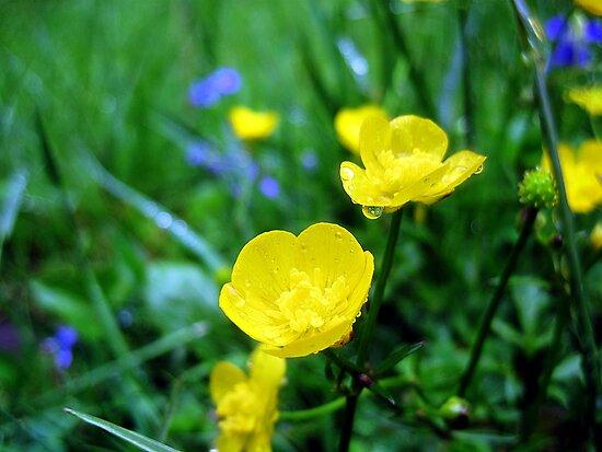 buttercup raindrops by LoreLeft27