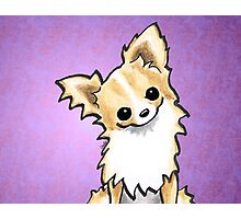Talk to Me | Long Haired Chihuahua Fawn/White Photographic Print