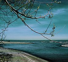 Barrier Beach - Old Woman Creek by MSRowe Art and Design