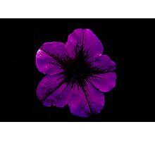 Purple Geranium Photographic Print