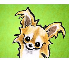 Long Haired Chihuahua Trim Time Photographic Print