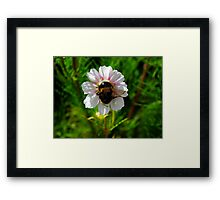The Humble Bumble Framed Print