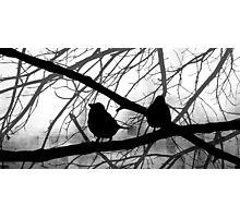Birds In Shadow - Black and White Version Photographic Print