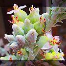 Flapjack Flowers by Ginny Schmidt
