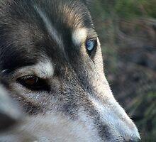 Wolf's Eyes by WilMorris