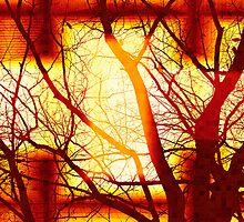 Harmonious Colors - Sunset by SRowe Art