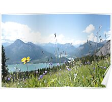 Mountain Wildflowers Poster