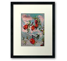 Honey eaters 2012 Framed Print