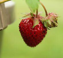 Strawberry by karencadmanfoto